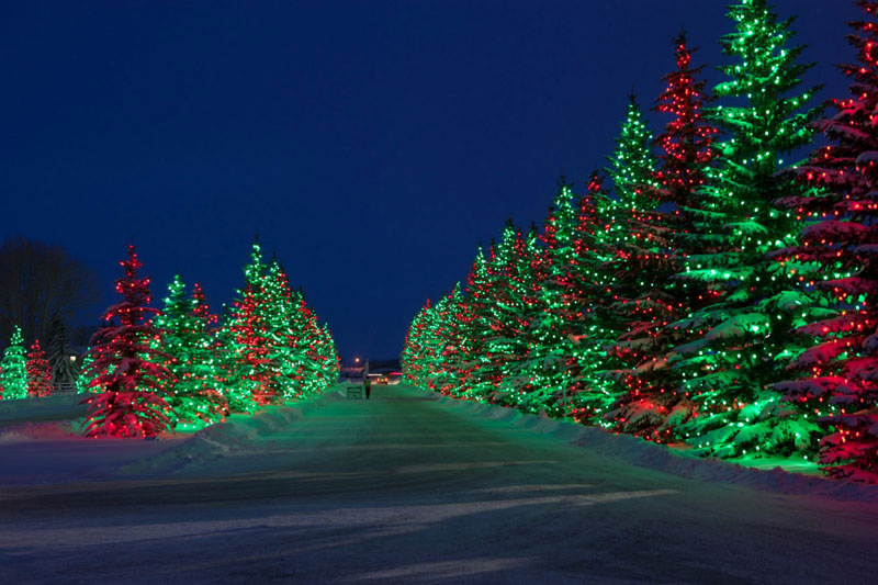 Christmas Lights at Spruce Meadows Event